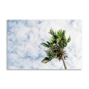 Wandbild Palmen